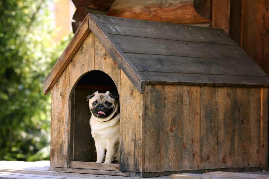 Blog Casas Perros 02 Eurolacas