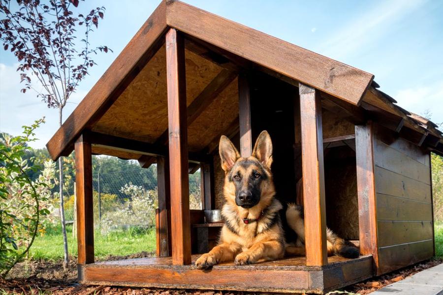Blog Casas Perros 03 Eurolacas