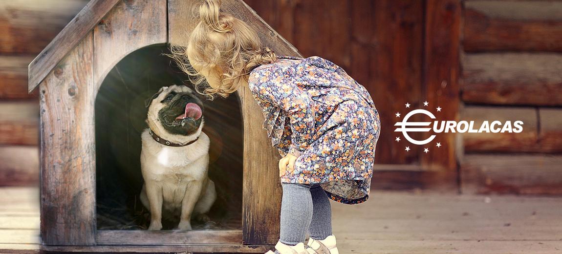 La casa ideal para tu perro.